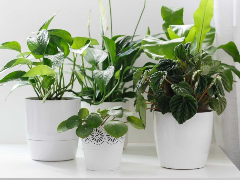 How to care for indoor plants (10+ tips for beginners)
