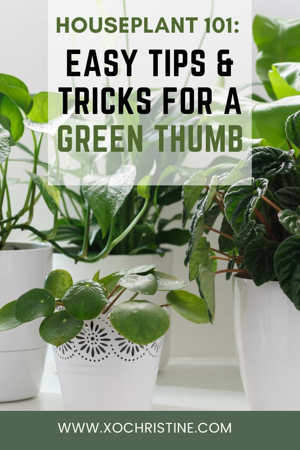 How to take care of indoor plants (10+ easy tips + tricks for beginners)