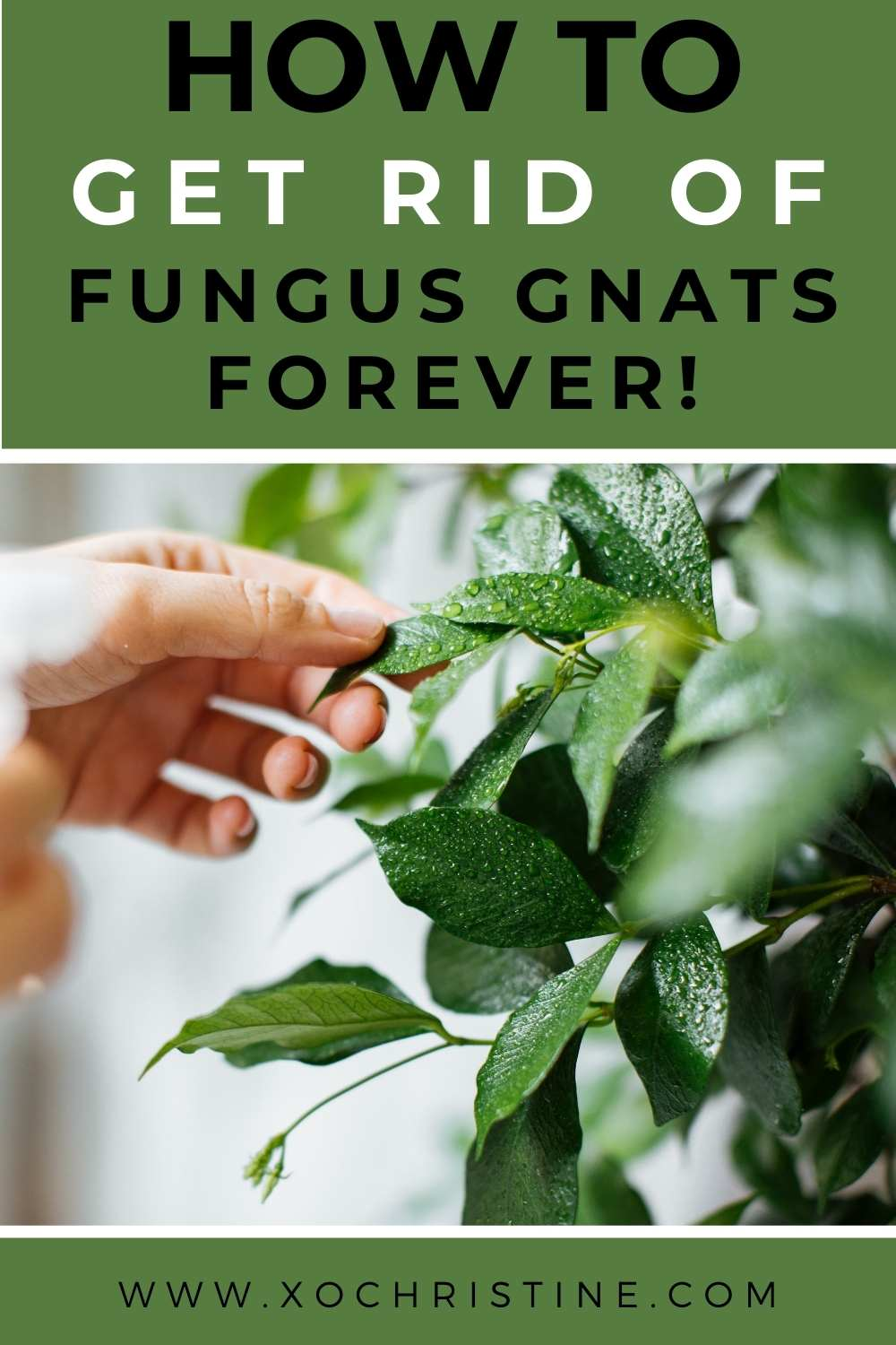 How to get rid of fungus gnats forever!