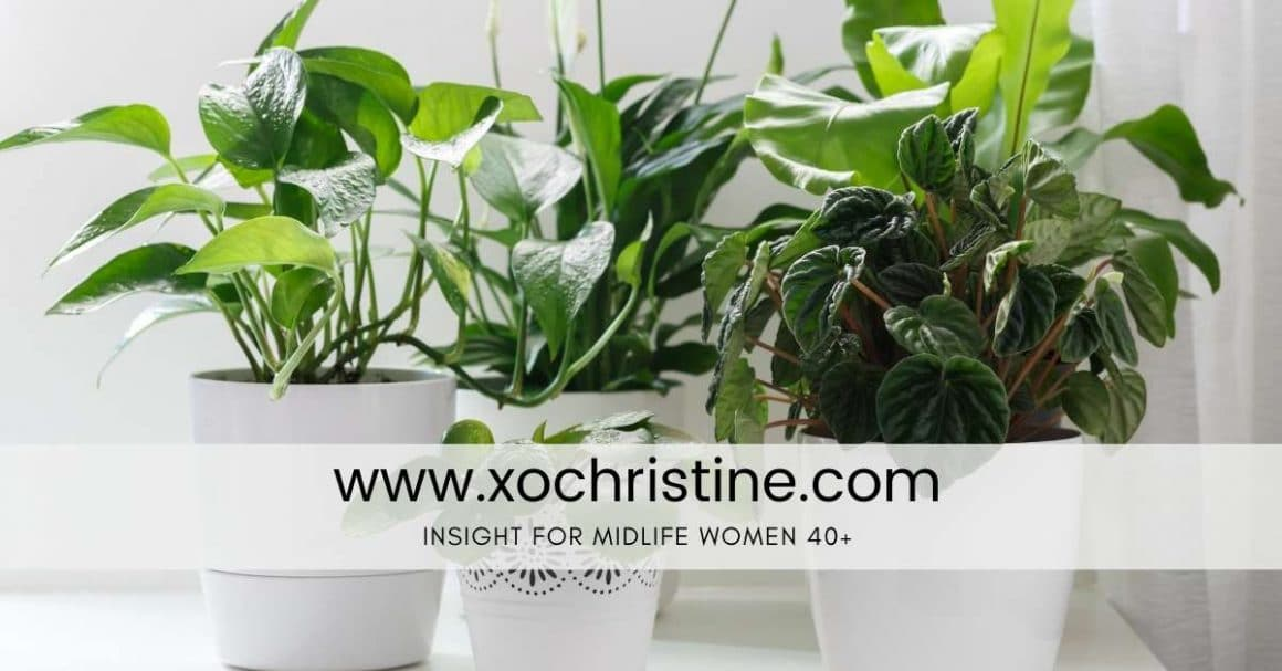 How to care for indoor plants ( tips and tricks for beginners)