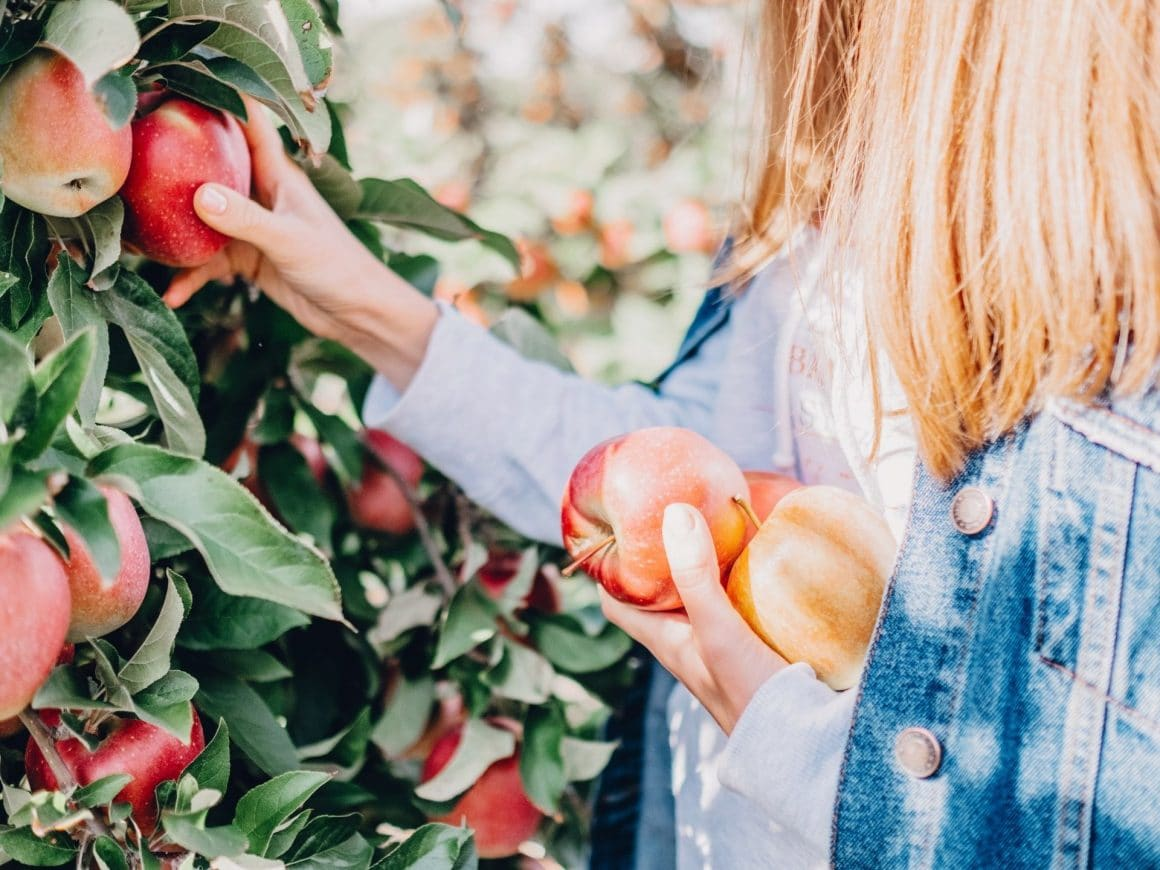 fun things to do this fall-go apple picking
