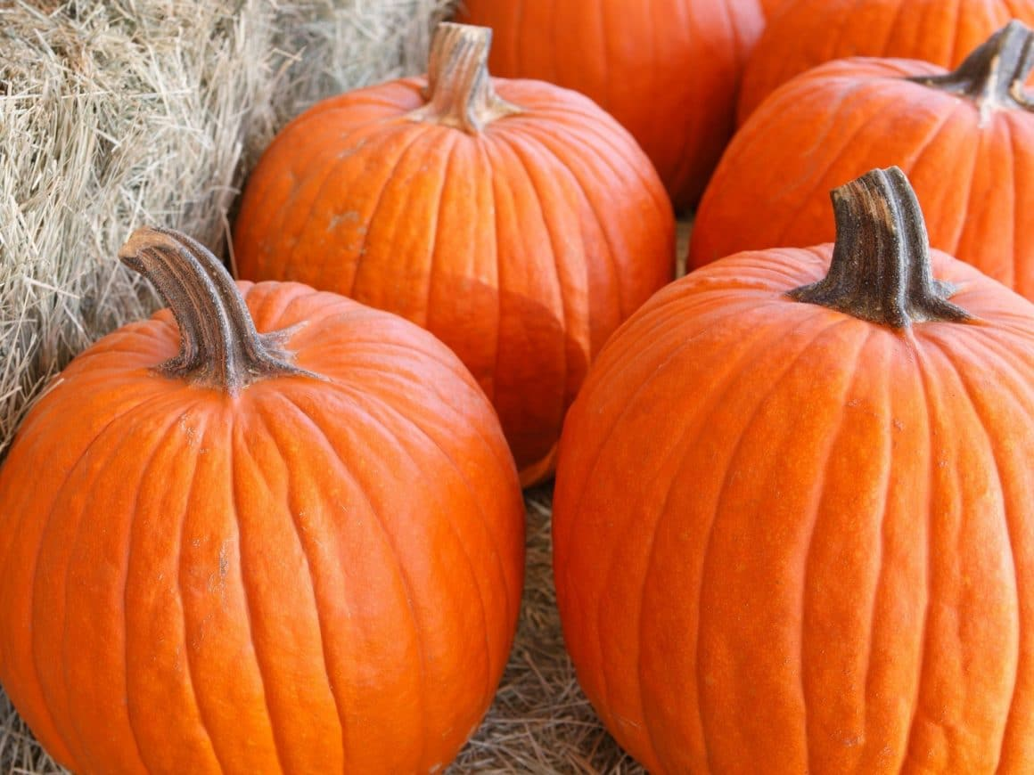 fun things to do this fall - go visit a pumpkin patch!